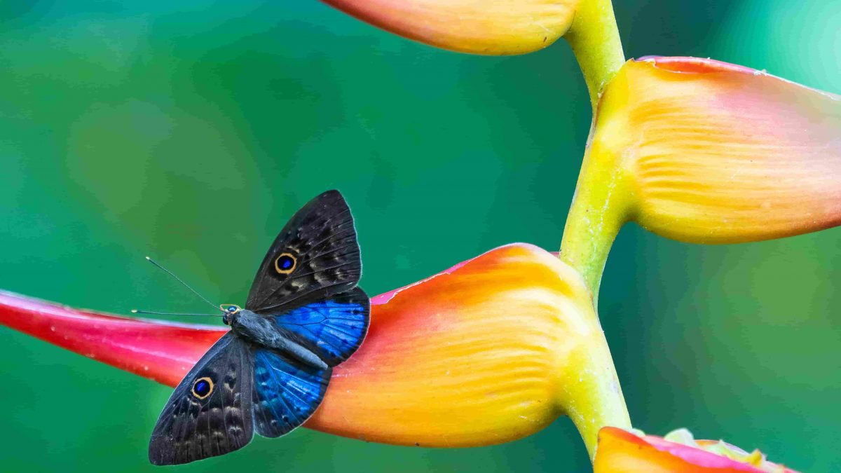Butterflies- A Perfect Example of Metamorphosis or Death And Resurrection Theory