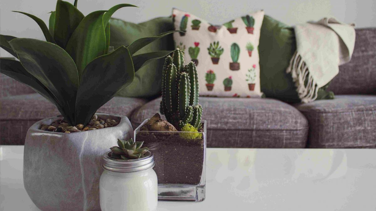 The Best Indoor Plants To Decorate your House With