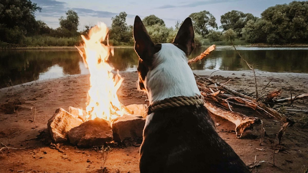 Going Camping With Your Dog? Here's What You Should Know